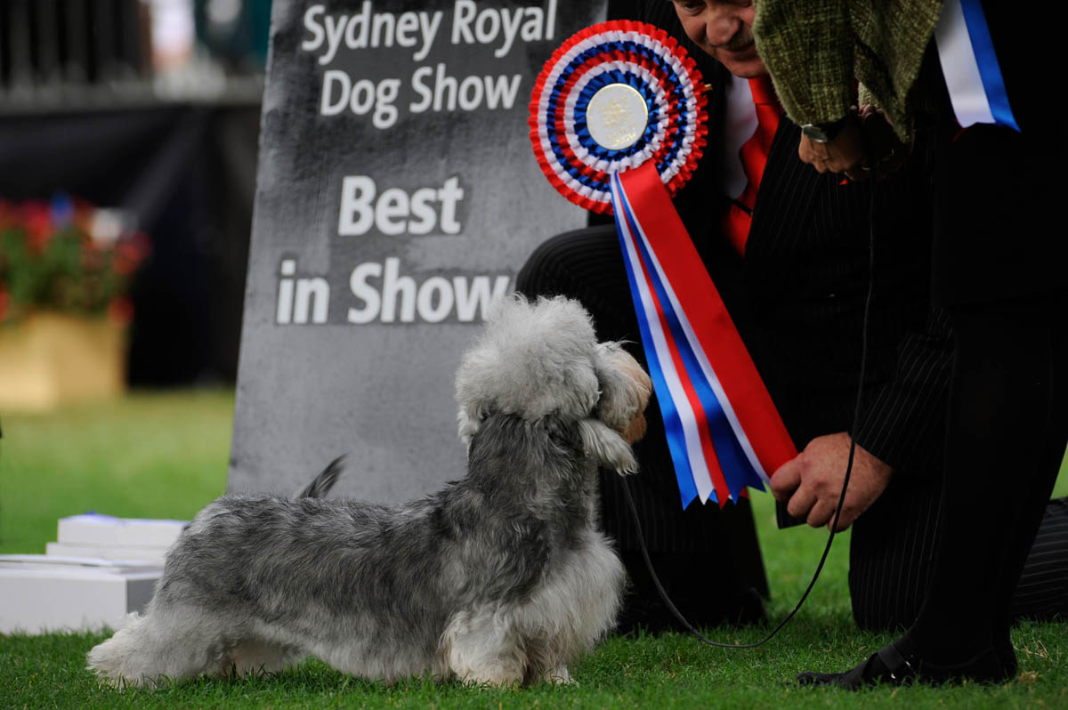 Winner, Best in Show