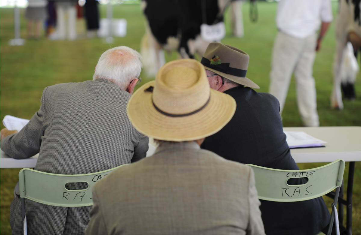 Cattle Judging, Royal Easter Show